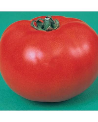 Tomate SUPER ANCON