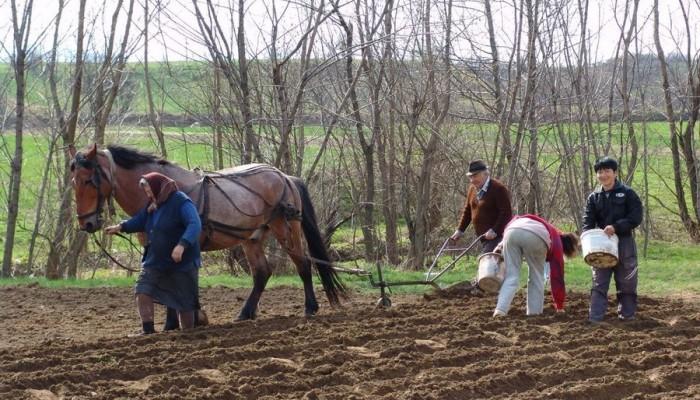 Campania agricolă de primăvară